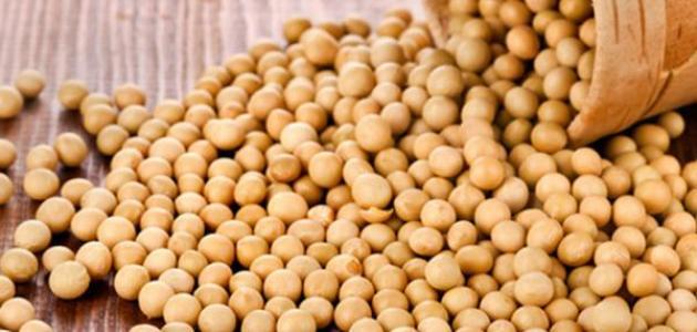 متعاملون: نظام الأسد  يطرح مناقصة لشراء 50 ألف طن من فول الصويا وكمية مماثلة من الذرة