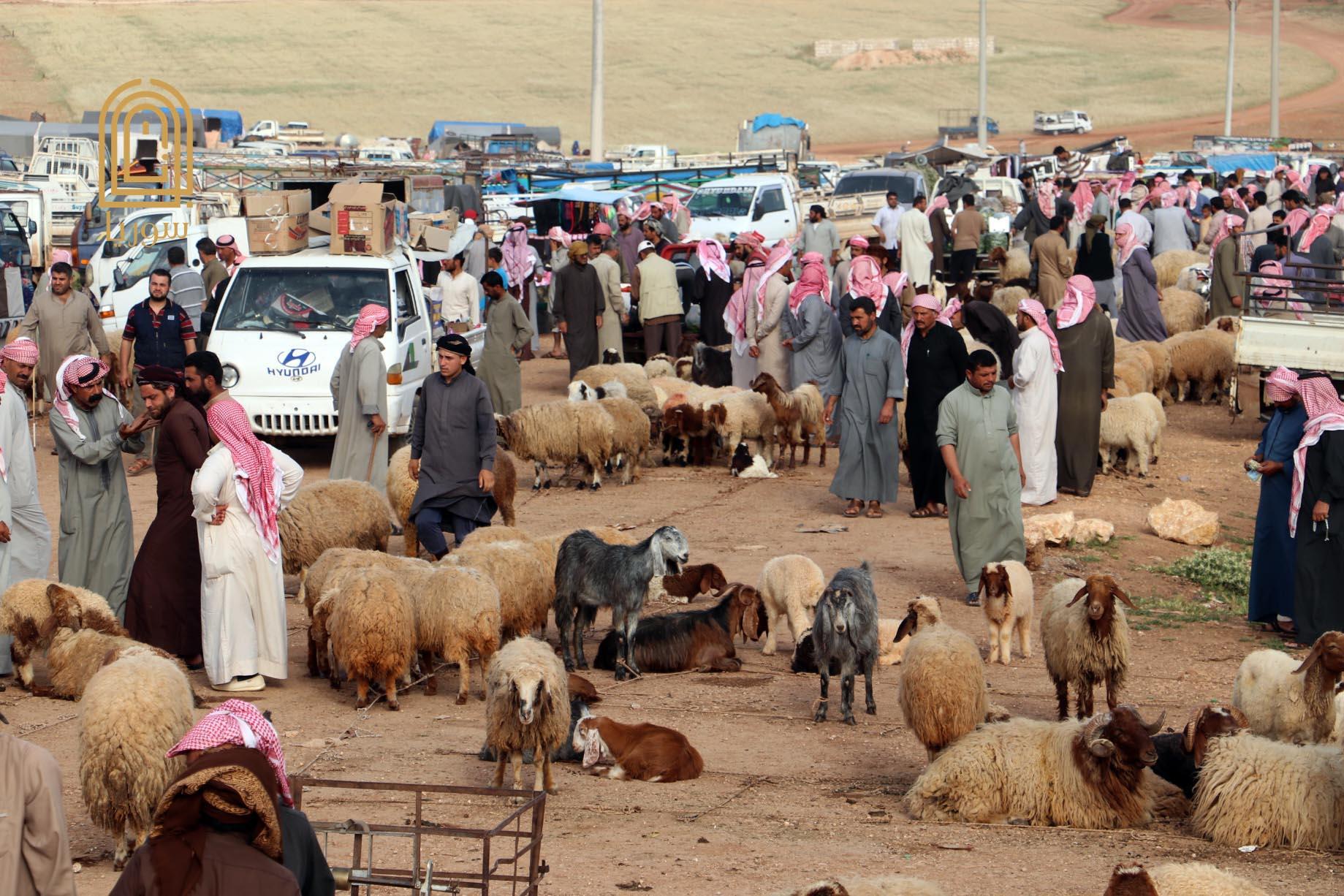 قبيل عيد الأضحى .. أسعار الخراف تحلق في سوريا