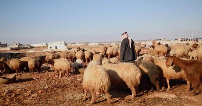 إدلب.. قرار يلزم تجار المواشي بالتعامل بالليرة التركية