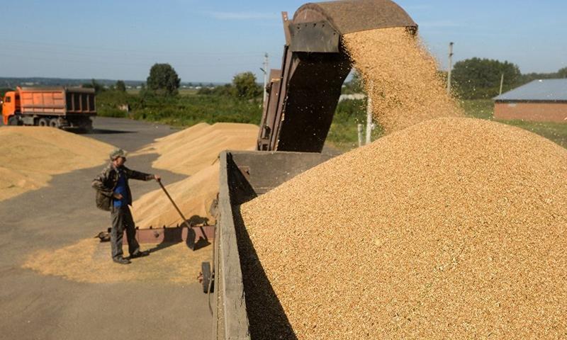 النظام  يكشف عن سرقات وفساد في مراكز تخزين الحبوب  ويؤكد ان  القمح ليس بأيدٍ أمينة