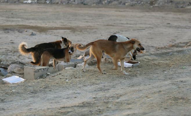 الغوطة الشرقية...كلاب مسعورة تهاجم طفلين وتتسبب بوفاتهم