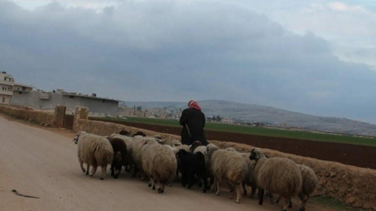 ميليشيا فاطميون تفرض الزكاة على رعاة الأغنام بريف حمص
