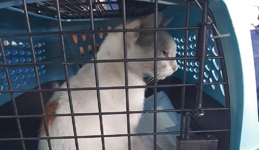 القبض على قط يهرب المخدرات إلى داخل  أحد السجون في بنما
