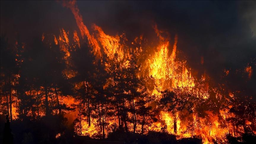 حرائق الغابات في أنطاليا تتسبب بإصابة شخص وتضرر 53 آخرين