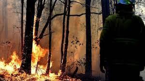 النظام ينفذ  حكم الاعدام  بـ 24 شخصاً اتهموا   بإشعال حرائق الغابات